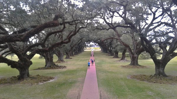 Live Oaks in front of Laura Plantation House