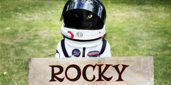 Rocky The Extraterrestrial Cat
