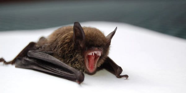 Saving Wildlife, One Bat At A Time