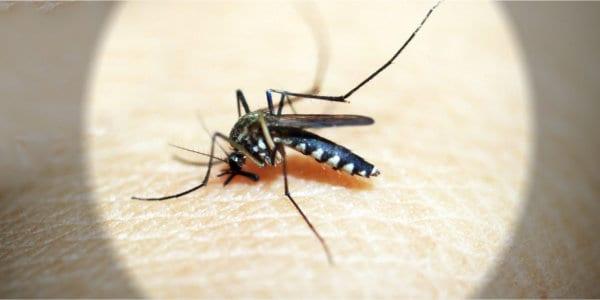 Mosquito Raid