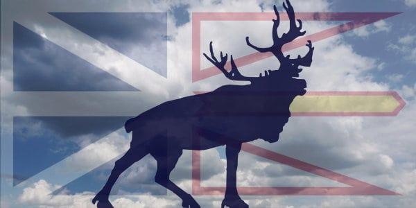 The Men of the Newfoundland Regiment
