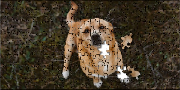 Dog puzzle with 2 pieces not completed