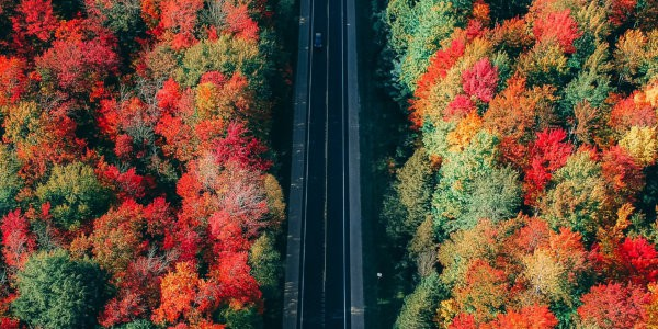 Car on road with fall coloured trees on both sides, viewed from above.